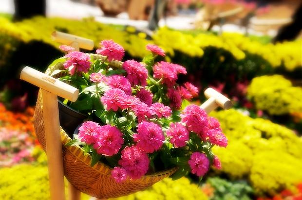 The flower basket.