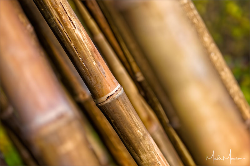 In the bamboo forest