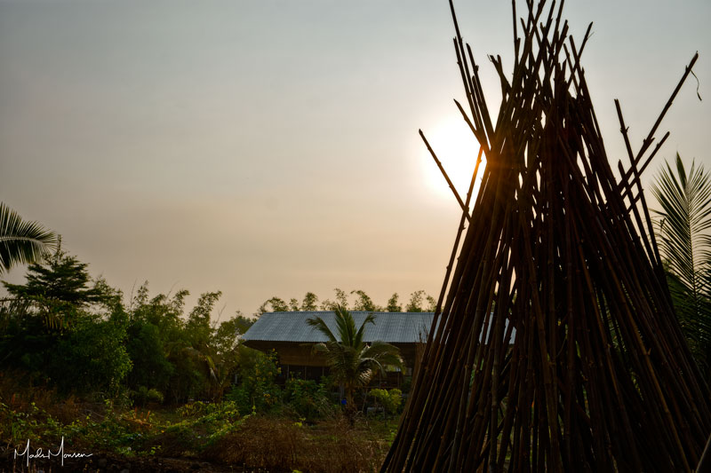 Sunrise at the bamboo farm